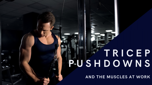 How To Do Tricep Pushdown Exercises & The Muscles Worked